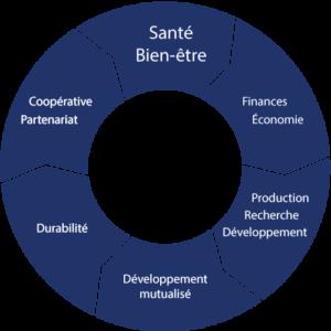 Graphique de développement de la société coopérative